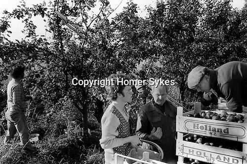 Casual seasonal fruit picking work, Wisbech Cambridgeshire UK. Apple picking.
