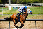 Amarish with Edgar Maldenado aboard wins the Willard L. Proctor Stakes at Betfair Hollywood Park in Inglewood, California on June 16, 2012.