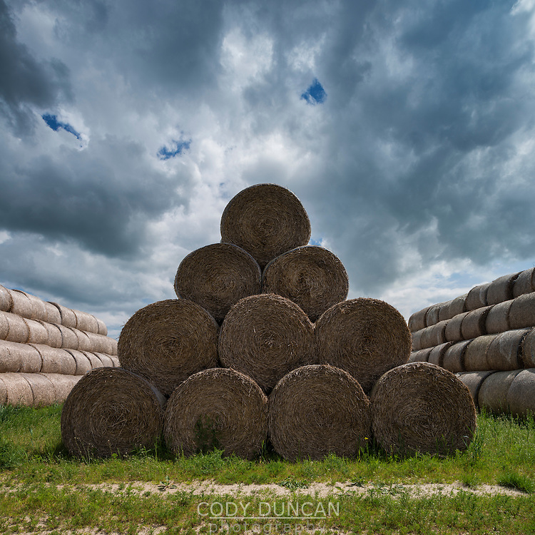 Bales of hay stacked in field, Grabine - Grabina, Prudnik County, Opole Voivodship, Silesia, Poland