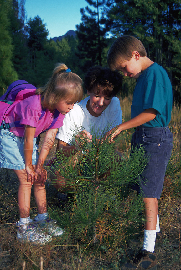 Mother and children examining young pine trees in wilderness setting