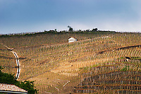 "Terraced vineyards in the Cote Rotie district around Ampuis in northern Rhone planted with the Syrah grape. With a tool shed painted white and the text ""Barge"" (Gilles).  Ampuis, Cote Rotie, Rhone, France, Europe"