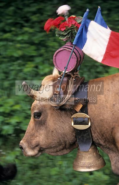 Europe/France/Auvergne/12/Aveyron/Env. de Saint-Come d'Olt: Passage du troupeau lors de la transhumance en Aubrac - Détail des décorations des vaches