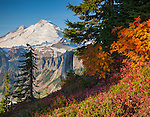 Mount Baker-Snoqualmie National Forest, WA: Mount Baker from Artists Ridge Trail with heather, huckleberries and mountain ash in fall color.