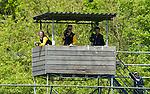 BILTHOVEN - HOCKEY - Videotoren bij SCHC met links Den Bosch assistent Bas van Zundert ,  tijdens    de eerste finale wedstrijd in de hoofdklasse tussen de vrouwen van SCHC en Den Bosch (1-2 GG) . . COPYRIGHT KOEN SUYK