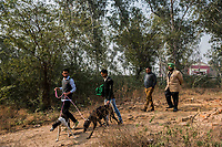 FARIDKOT, PUNJAB, INDIA - JANUARY 05, 2016: Trainers walk greyhounds owned by Kushaldeep Singh Dhillon also known as KIKI, prior to the start of a greyhound race meet on January 5, 2016 in Faridkot, India. <br /> Daniel Berehulak for The New York Times