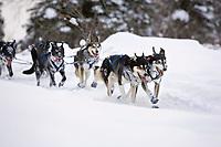 Robert Bundtzens sled dogs on trail near Finger Lake Chkpt 2006 Iditarod Finger Lake Alaska Winter