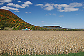 A very rural scene showing an expanse of fall corn fields with a farm tucked under a mountain in the reds, oranges and greens of fall all against a cloud-filled, blue sky in Bethlehem, New York.