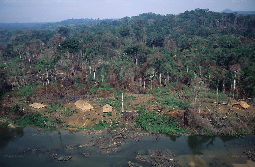 YANOMAMI TRADITIONAL LIFESTYLES , Amazon, near Boavista, northern Brazil, South America. Ecological biosphere and fragile ecosystem where flora and fauna, and native lifestyles are threatened by progress and development. The rainforest is home to many plants and animals who are endangered or facing extinction. This region is home to indigenous primitive and tribal peoples including the Yanomami and Macuxi.