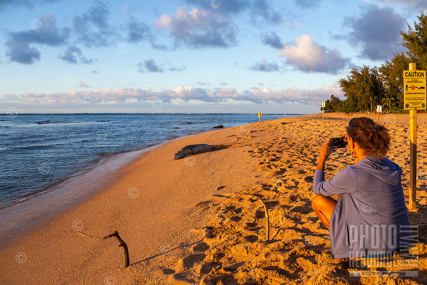 At sunset, a woman takes a photograph of a Hawaiian monk seal near Tunnels Beach in Ha'ena, Kaua'i.
