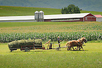 Amishman hauling large hay bails with horses.