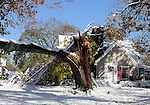 A large tree broke at the trunk and came down on Park Etreet in Manchester after the record breaking snow storm brought down trees and utility wires leaving more than 700, 000 CL+P customers in the dark, Sunday, October 30, 2011. (Jim Michaud/Journal Inquirer).
