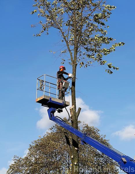 Boomverzorger aan het werk. Top wordt uit de boom gezaagd na een storm