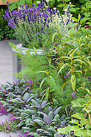 Herb garden on the patio, Lavandula angustifolia lavender in metal pot container, Salvia officinalis sage, thymus thymes in bloom, persicaria, mixture of varietites