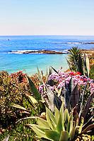 Wildflowers Off The Bluff Of Laguna Beach California