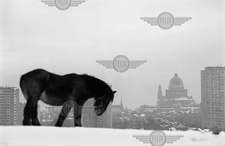 A horse on a snow covered hill overlooking Brussels.