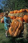 Jerseydale Pumpkin Patch