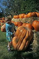 Jerseydale Pumpkin Patch