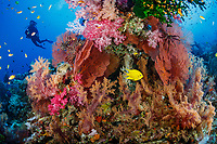 Fiji coral reef photos