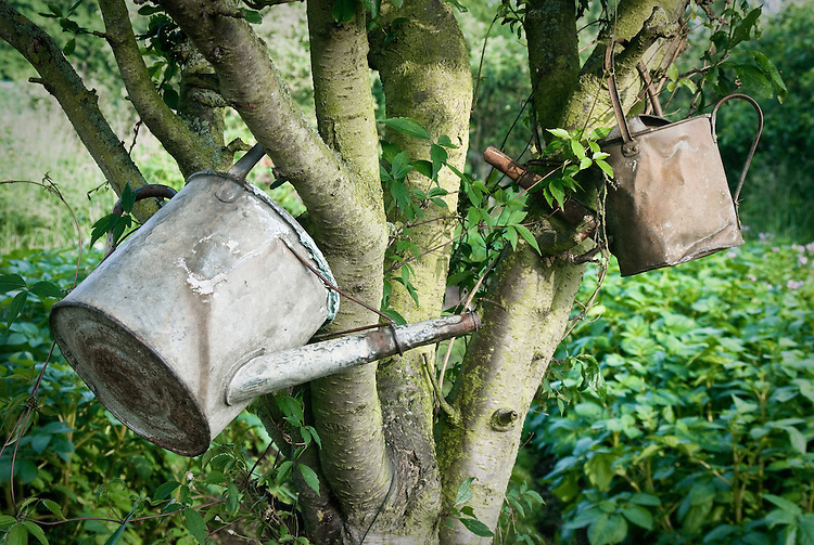 Old watering cans on an allotment site.