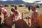 Maasai women set up  a fence within the Moran village prior to the feast which will  end the Morans' journey into manhood