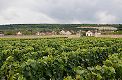Chateau Chassenge Montrachet, burgundy region, France, Bourgogne, vineyard, wine