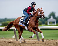 ELMONT, NY - JUNE 07: Vino Rosso gallops and trains as horses prepare Thursday for the 150th running of the Belmont Stakes at Belmont Park on June 7, 2018 in Elmont, New York. (Photo by Scott Serio/Eclipse Sportswire/Getty Images)