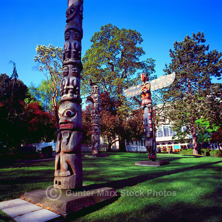 Totem Poles in Thunderbird Park, Victoria, BC, Vancouver Island, British Columbia, Canada - Gitxsan (Gitksan) Totem Poles in foreground and left background, and Kwakwaka'wakw (Kwakiutl) Totem Pole in right background