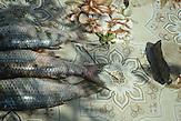 Karpfen, ausgenommen, vor der Zubereitung der täglichen Fischsuppe, Sulina, Rumänien, 2015 / carps about to be prepared as the daily fish soup, Sulina, Romania, 2015
