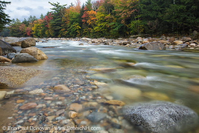 The East Branch of the Pemigewasset River, near the Lincoln Woods Trailhead during the autumn months in Lincoln, New Hampshire USA.