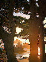 Tree and beach at sunset. Bandon, Oregon