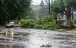 WATERBURY , CT-080420JS04—A driver maneuvers around a downed tree on Pine Street at the intersection of Templeton Street in Waterbury as Tropical Storm Isaias tore through the region on Tuesday leaving a path of damage and many without power. <br /> Jim Shannon Republican-American