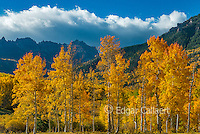 Aspens, Populus Tremula, Precipice Peak, Uncompahgre National Forest, Colorado