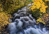Augusta Creek, Oregon