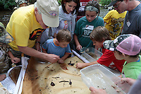Stream Ecology, Xtreme Roan Mountain Adventures Youth Naturalists' Rally