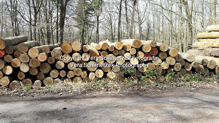 Europe, Germany, Ruhr Area, Ardey, Wetter, Herdecke, Forstarbeiten und Rodungen<br /> <br /> Europa, Deutschland, Ruhrgebiet, Ardey, Wetter, Herdecke, forest work and deforestation<br /> <br /> [MODEL RELEASE: NO, Copyright: Vera Schimetzek, Bornstrasse 5, 58300 Wetter, Germany, phone: 0049.2335.970650, mobil: 0049.151.21220918, www.schimetzek-foto.de, schimetzek@web.de,<br /> Die Verwendung des Fotos ist honorarpflichtig. Keine Verwendung ohne Genehmigung.  Es gelten die AGB.<br /> For use the general terms and conditions are mandatory. No use without permission. The use of the image is subject to a fee.]