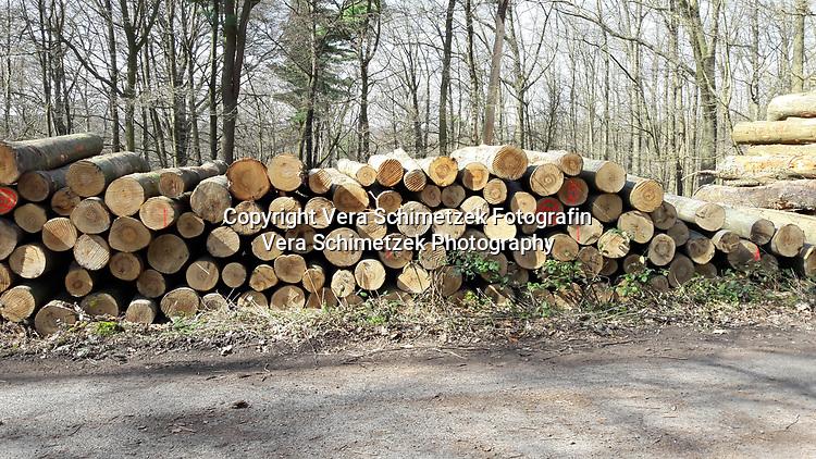 Europe, Germany, Ruhr Area, Ardey, Wetter, Herdecke, Forstarbeiten und Rodungen<br /> <br /> Europa, Deutschland, Ruhrgebiet, Ardey, Wetter, Herdecke, forest work and deforestation<br /> <br /> [MODEL RELEASE: NO, Copyright: Vera Schimetzek, Bornstrasse 5, 58300 Wetter, Germany, phone: 0049.2335.970650, mobil: 0049.151.21220918, www.schimetzek-foto.de, schimetzek@web.de,<br /> Die Verwendung des Fotos ist honorarpflichtig. Keine Verwendung ohne Genehmigung.  Es gelten die AGB.<br /> For use the general terms and conditions are mandatory. No use without permission. The use of the image is subject to a fee.]