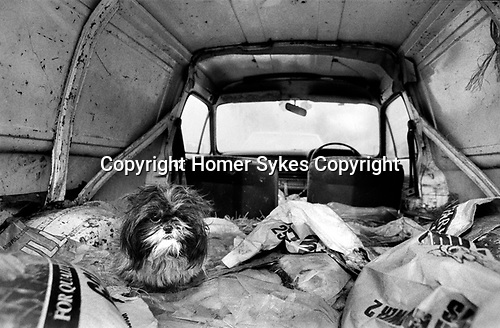 Puppy Farming Wales 1989. A Shih Tzu living in the back of an old van.<br />
