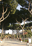 Park in Rome, Italy with tall Umbrella Pines.