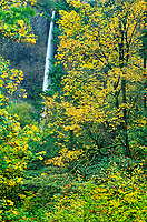 738600003 fall colored trees frame latourell falls in the columbia river gorge national scenic area in oregon
