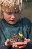 Junge, Kind mit einem Erdkröten-Pärchen auf der Hand, Erdkröte, Erd-Kröte, Kröte, Bufo bufo, European common toad, Laichwanderung