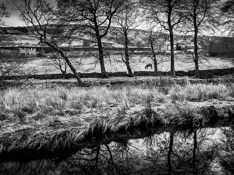 Pennine scene with trees and horse.