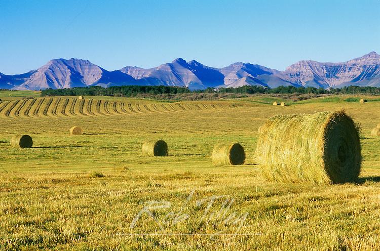 Hay Harvest, Alberta, Canada