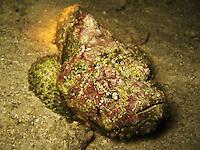 World's most venomous fish species