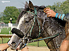 Lazur Hess winning 1st time out at Delaware Park on 8/13/14