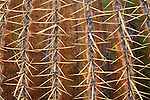 Cactus at the Wrigley Memorial Botanical Garden, Avalon, Catalina Island, California