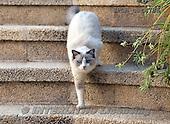 Xavier, ANIMALS, REALISTISCHE TIERE, ANIMALES REALISTICOS, cats, photos+++++,SPCHCATS786,#a#