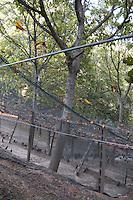 Riproduzione e allevamento di selvaggina terrestre per il ripopolamento delle zone adibite alla caccia a Montalto delle Marche..Breeding and rearing of game for the restocking of the areas used for hunting in Montalto delle Marche..