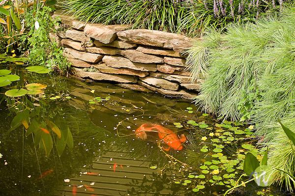 Garden pond with goldfish.