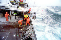 "The fishing vessel Reliance fishes for opilio crab in the Bering Sea during a storm. The Bering Sea is known for having the worst storms in the world. In this photo a deckhand has just thrown the ""hook"" at the buoy attached by a line to the crab pot sitting on the ocean floor. He will then pull it aboard using hydrolics. Crab fishing in the Bering Sea is considered to be one of the most dangerous jobs in the world. This fishery is managed by the Alaska Department of Fish and Game and is a sustainable fishery. The Discovery Channel produced a TV series called ""The Deadliest Catch"" which popularized this fishery."