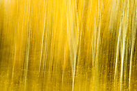 Aspen Grove abstract